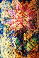 flower Az 00005