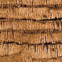 Seamless Palm Tree Bark Texture