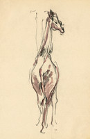 giraffe no.2