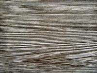 Wood 0956