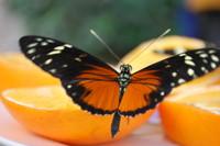 Butterfly_0004