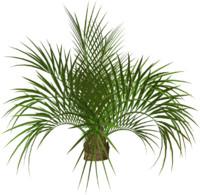 Palm tree 5