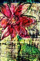 flower Az 00020