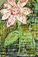 Flower Az 00024