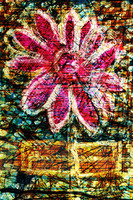 Flower Az 00042