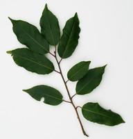 leaf_hedge