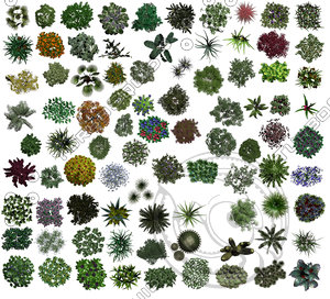 Bushes - Flowers - Small Trees Plan Pack