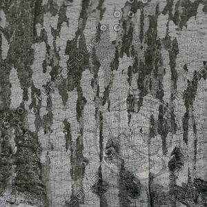 Brich bark texture
