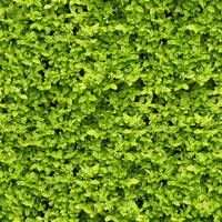 Tiled Hedge Texture