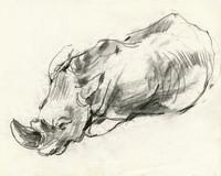rhino no.3