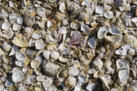 Shell_Texture_0005