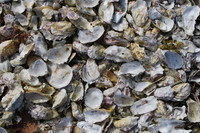 Shell_Texture_0006