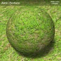 Grass Texture 421 B