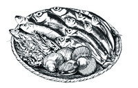 hand drawn seafoods