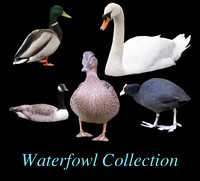 Waterfowl Cutout Collection