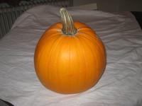 pumpkin photo stocks
