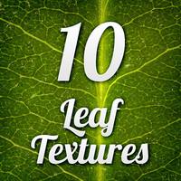 Leaf Textures Pack