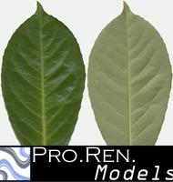 Leaf texture C