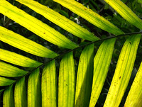 detail photography of palm leaf