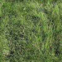 Long grass texture