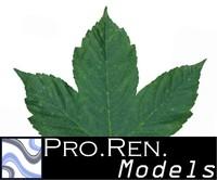 Leaf Texture D
