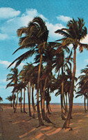 Palm tree beach