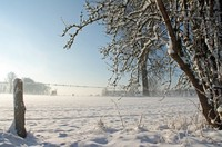 Winter and snow