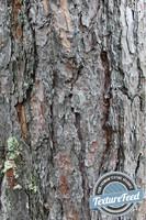 6 Bark Textures