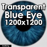 Biology 038 - Blue Eye