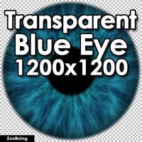 Biology 040 - Blue Eye