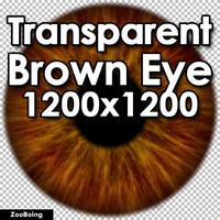 Biology 045 - Brown Eye
