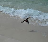 Sandpiper bird