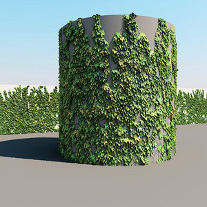 Architectural Ivy
