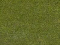 Grass 6K EXR Texture - Huge & Flat