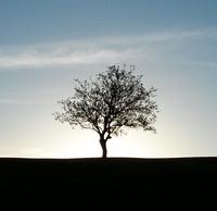 silhouette  tree morning sun