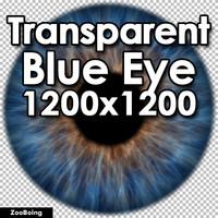 Biology 037 - Blue Eye