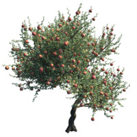 4 Cutout 2D Apple Tree Images