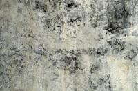 Moldy Wall 1