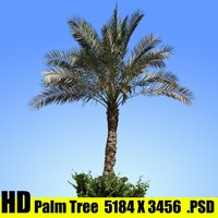 palm tree texture map