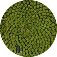 sunflower texture set