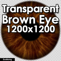 Biology 042 - Brown Eye