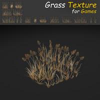 Dry BentGrass Texture