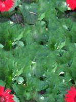 Free Tileable Plants