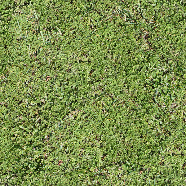 Texture Other Grass Texture Ground