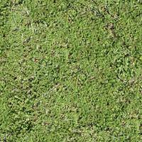 Short Grass Texture