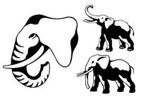 elephsnts