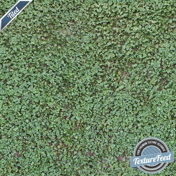 Grass Texture 04 | Tiled