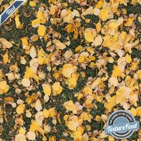 Grass Texture 06 | Tiled