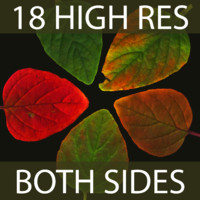 9 Assorted Leaves (Super Resolution, front and back.)