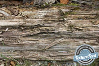 Wood Texture 19